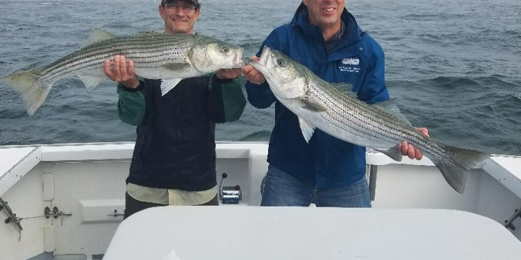 charter fishing cape cod