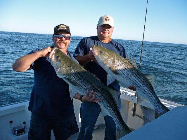 big striped bass cape cod emma jack large