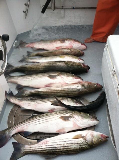 FISHING charter cape cod Fish!